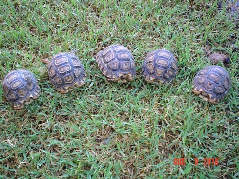 Mediterranean Tortoise Food List