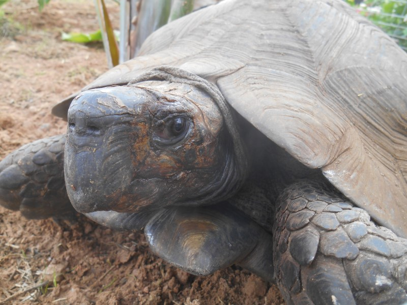 Black Mountain Tortoises