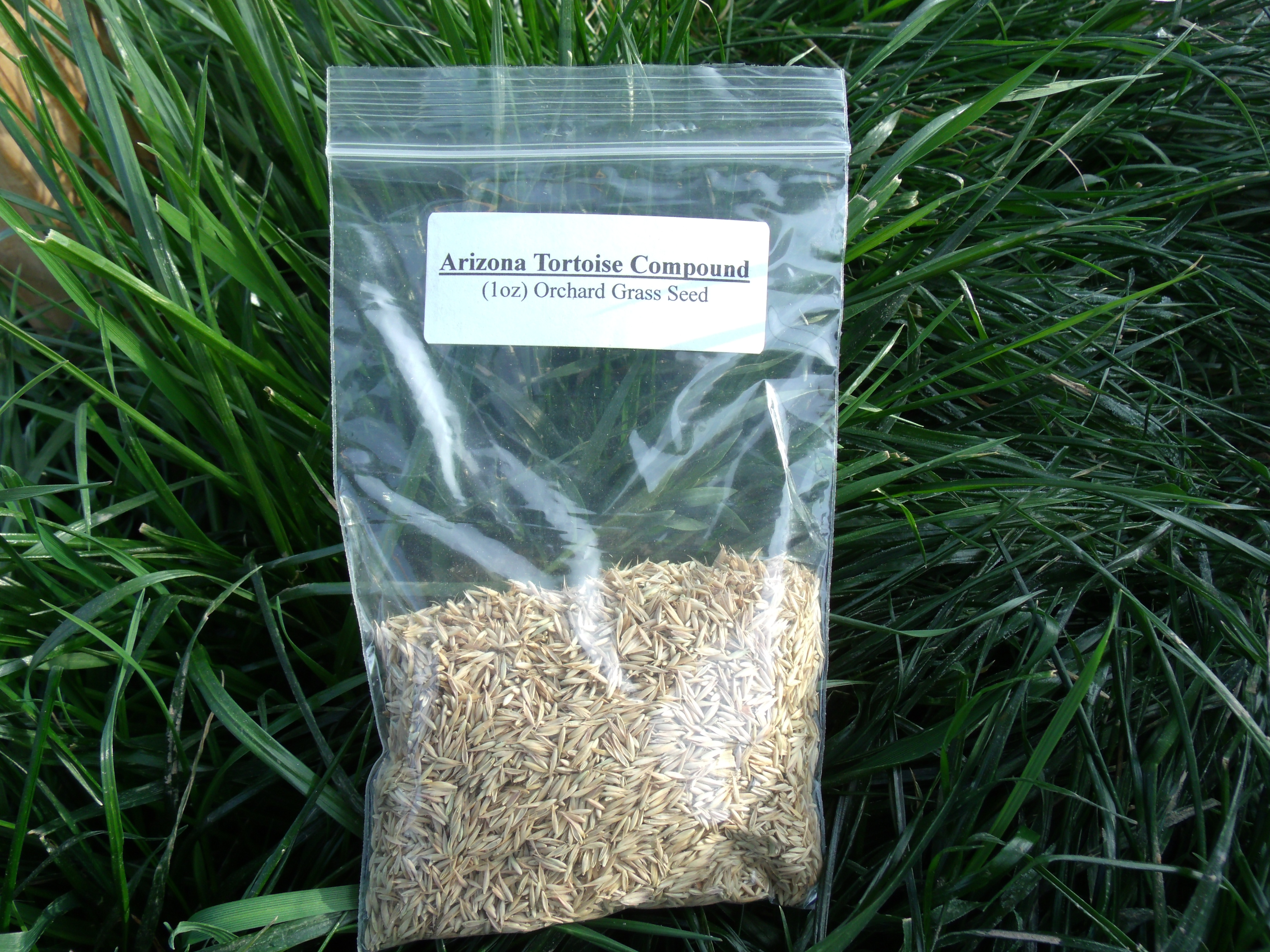 Orchard Grass Seed