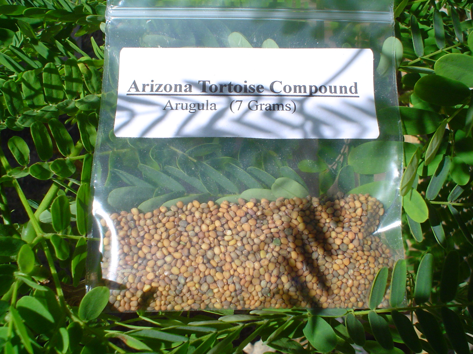 Arugula Seed Packet