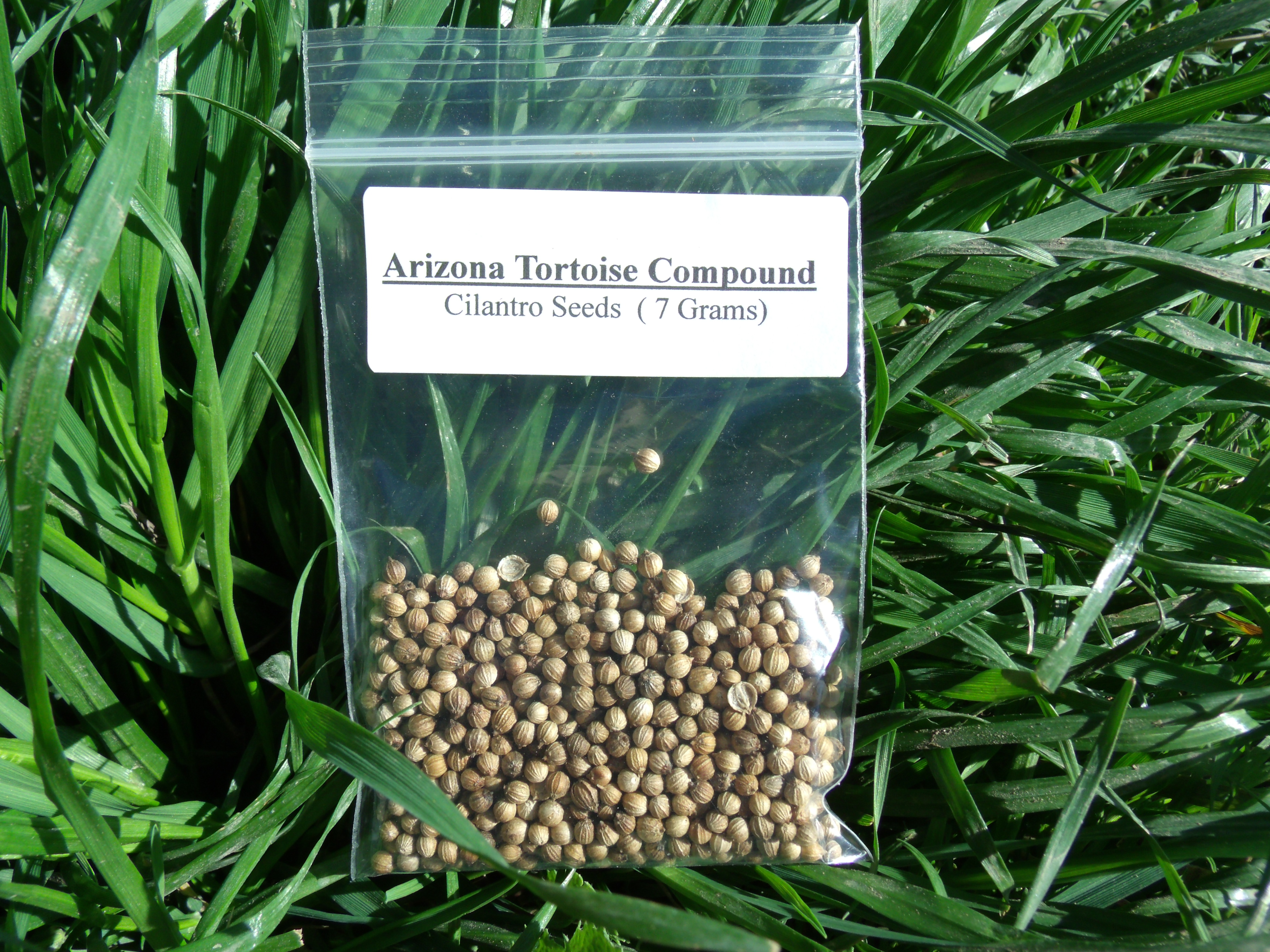 Cilantro Seeds