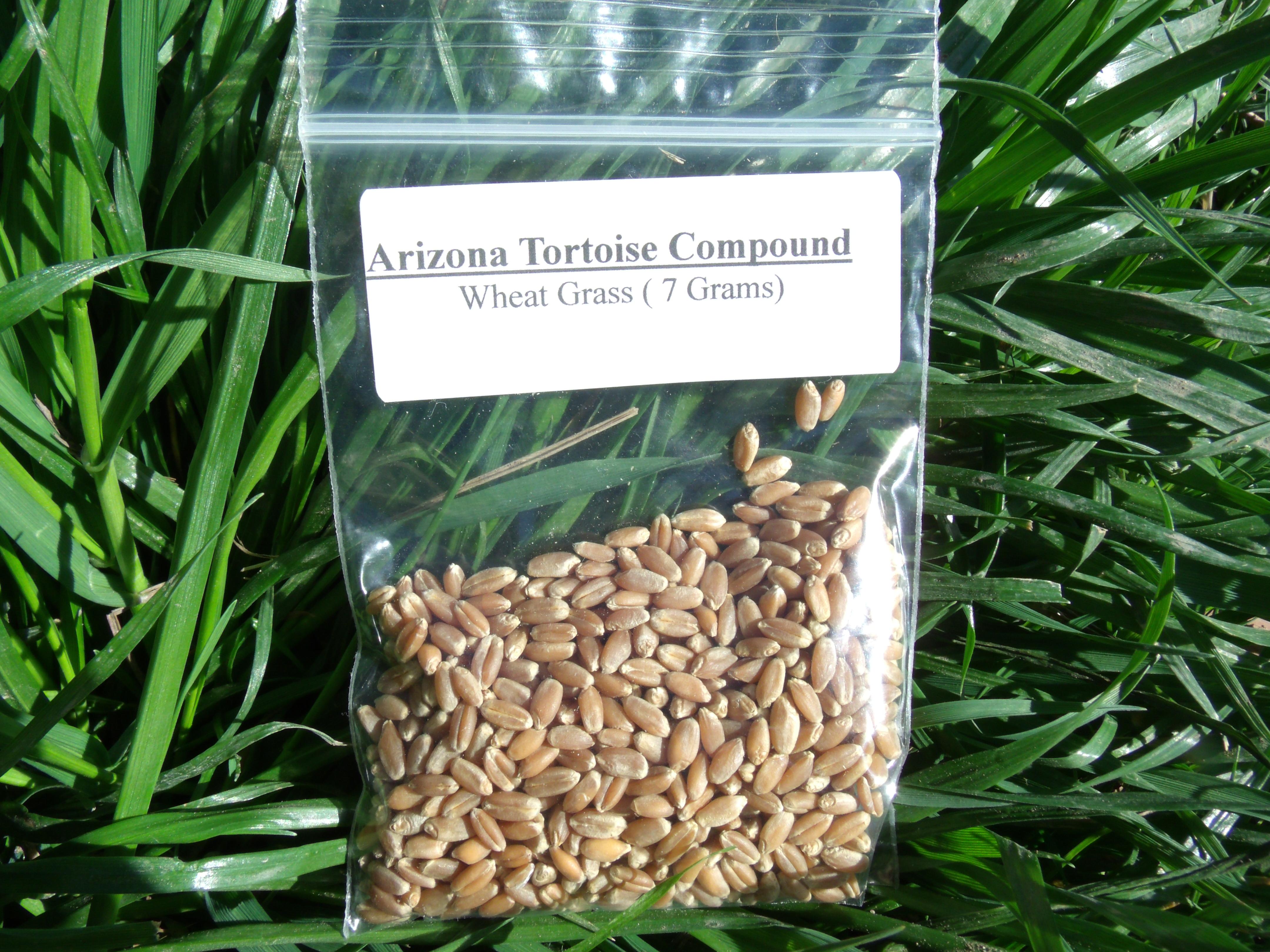 Wheat Grass Seeds