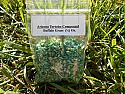 Buffalo Grass Seeds