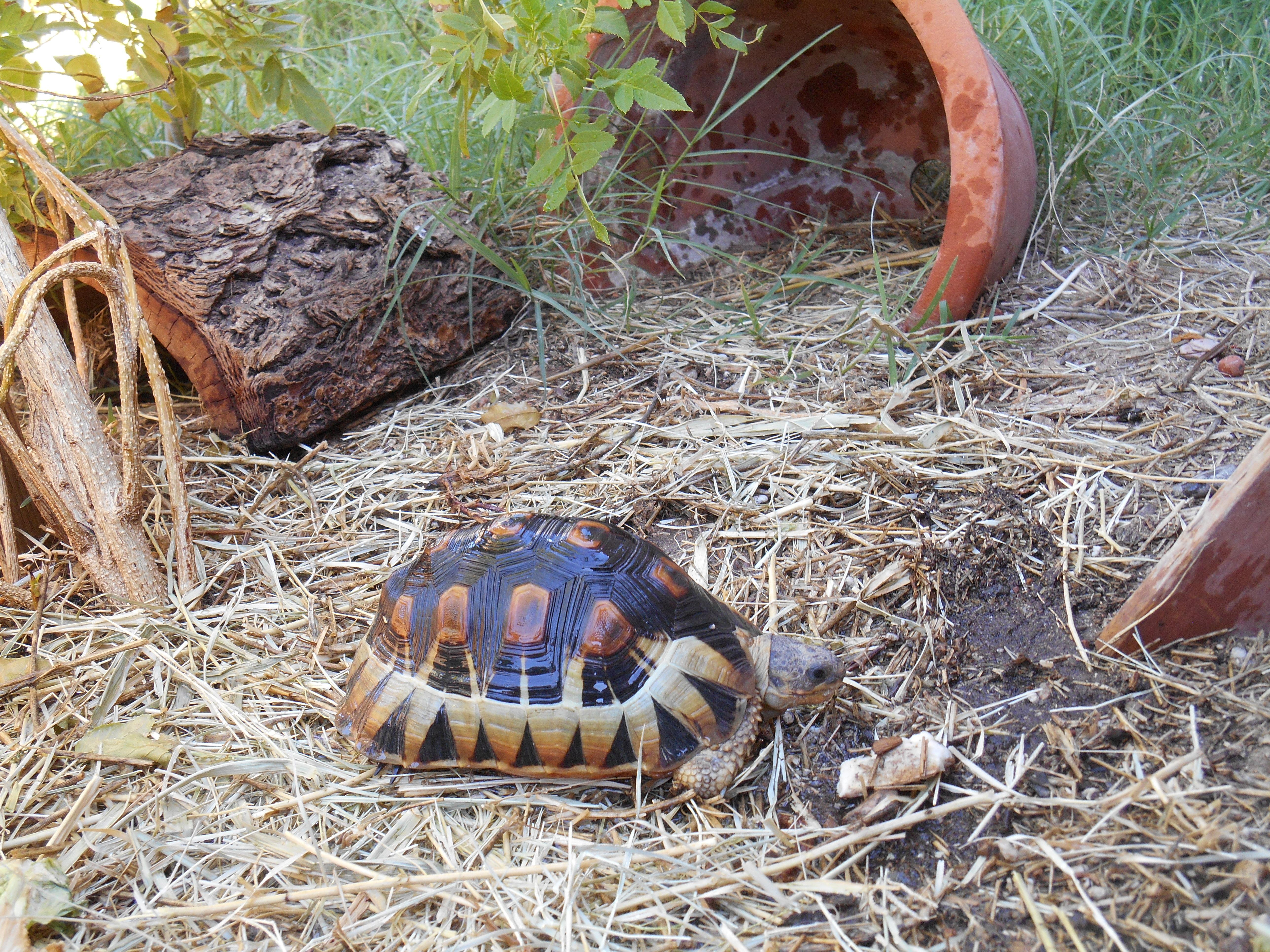 Bowsprit Tortoises