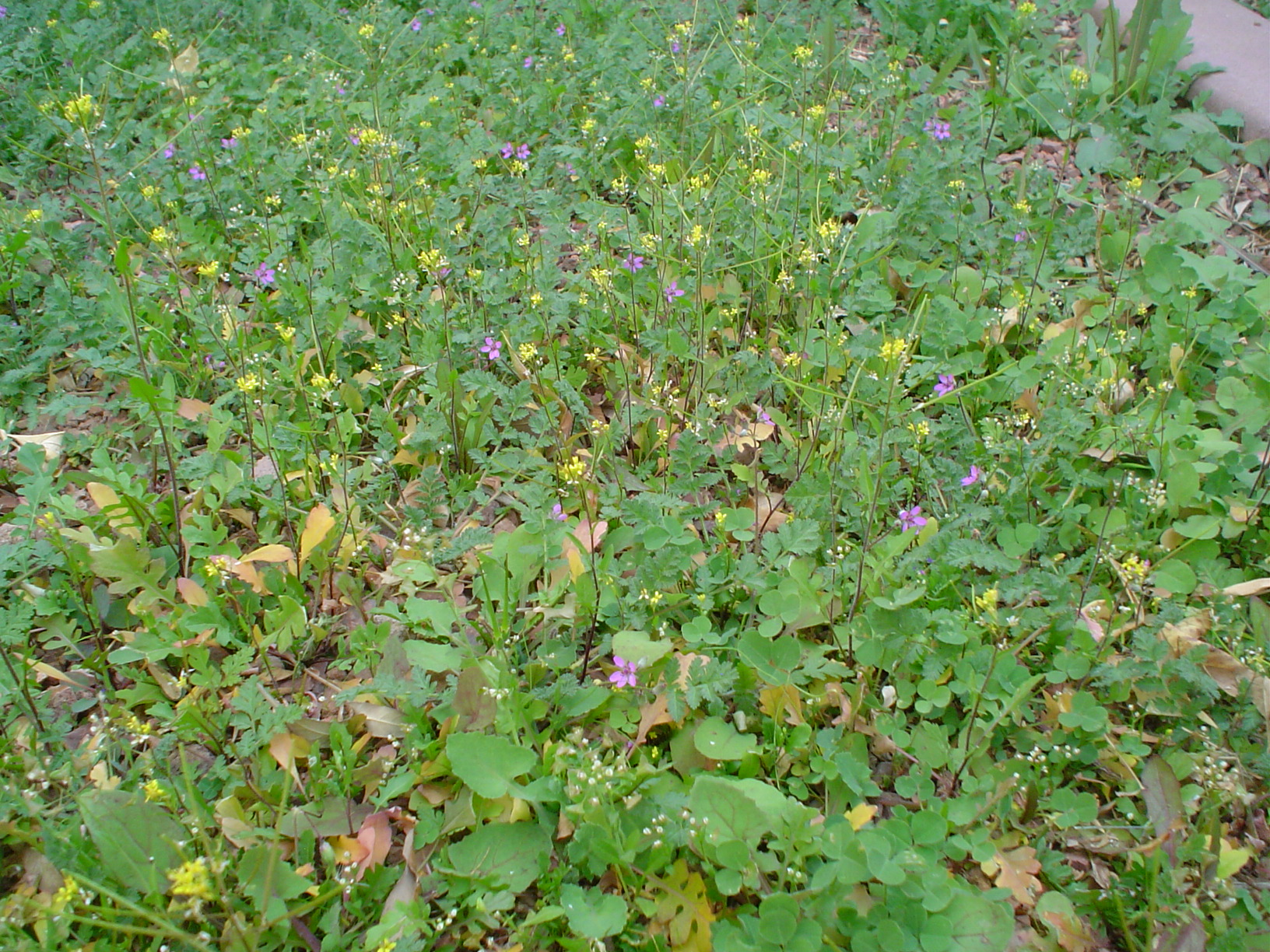 Edible Tortoise Seed Mixes