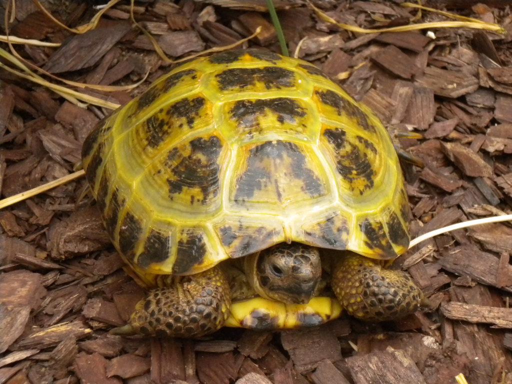 Baby Turtle Food List