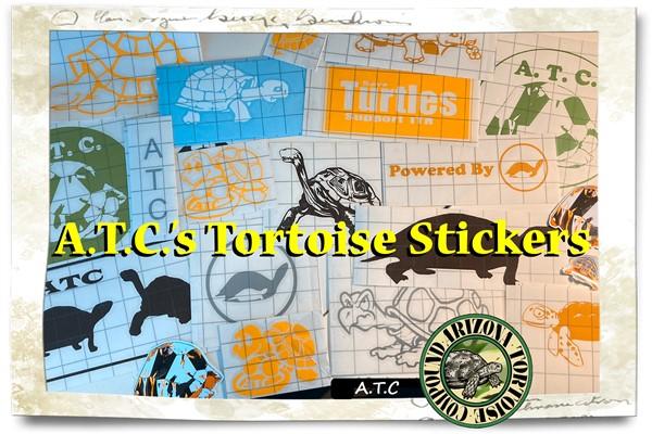 Tortoise Stickers