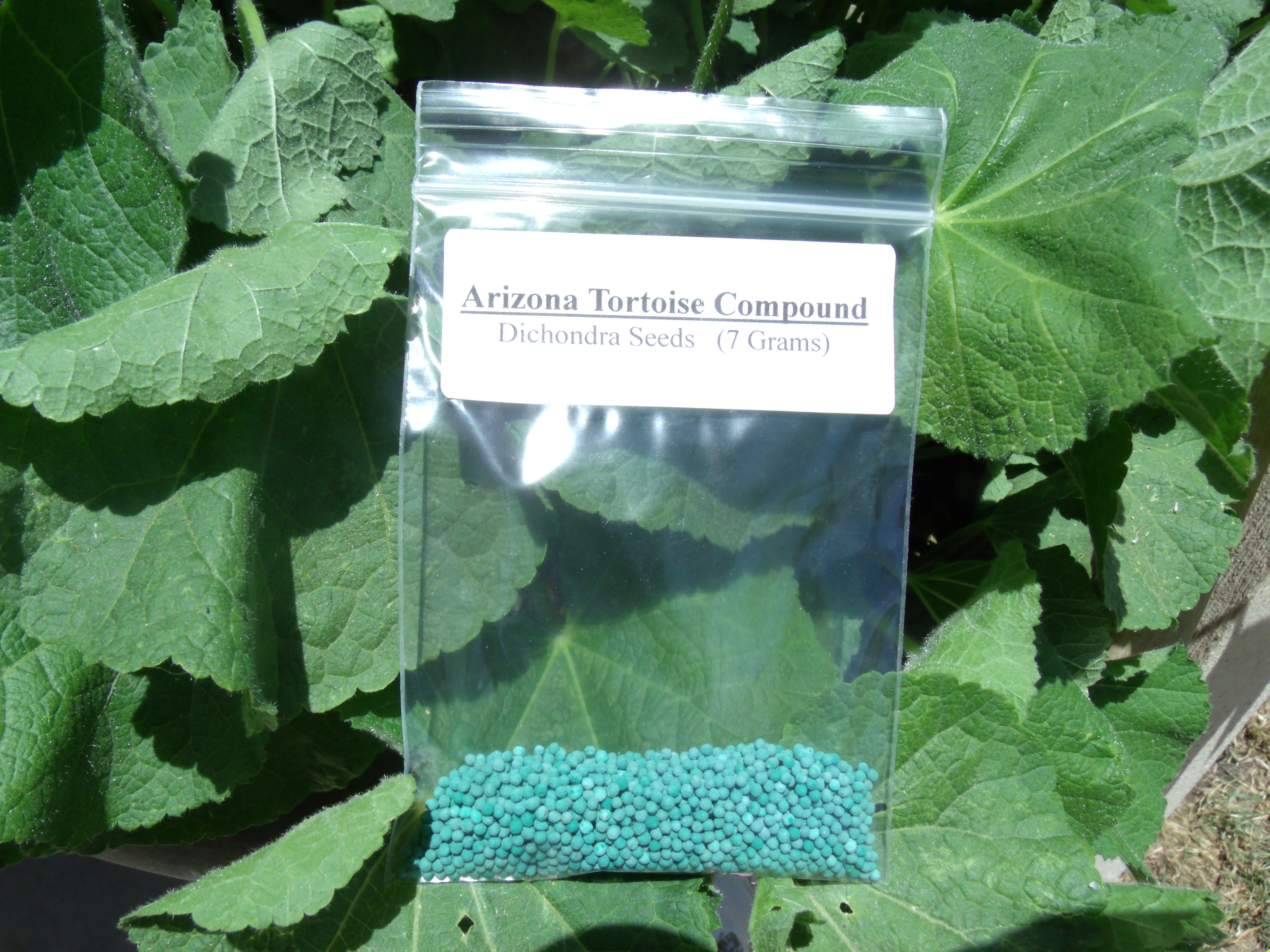 Dichondra Seed Packet