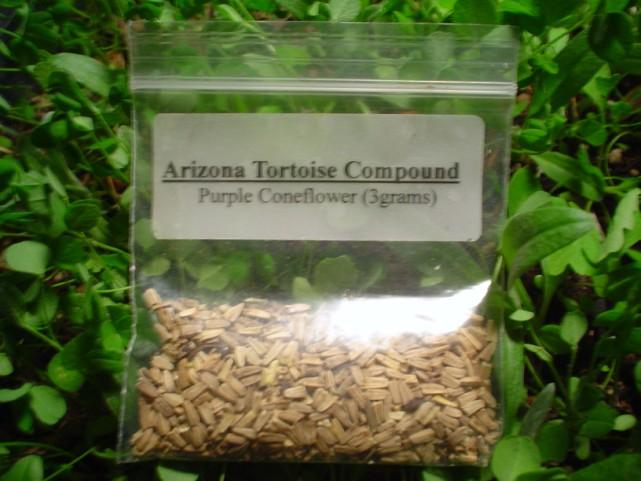 Purple Coneflower Seeds