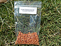 Sudangrass Seeds